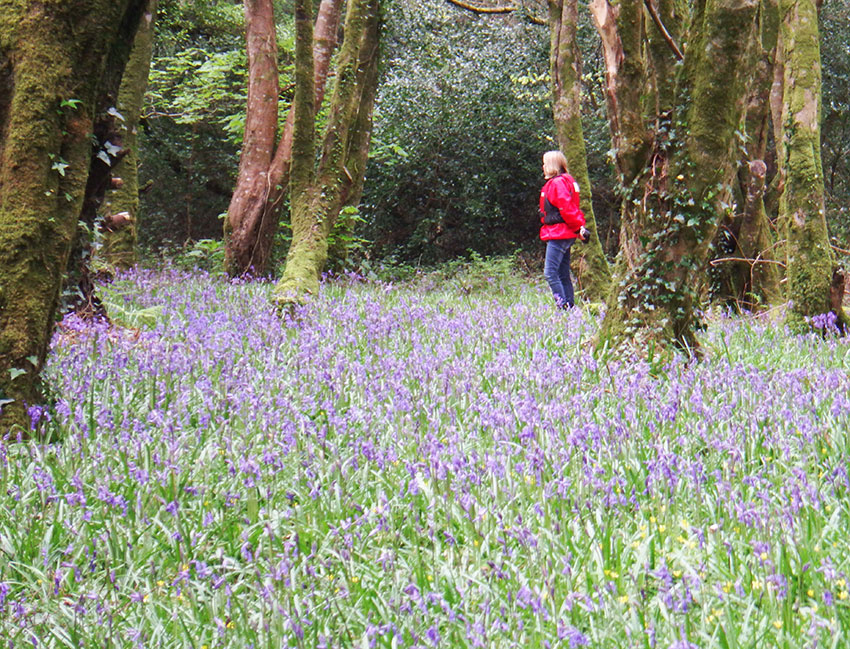 Bluebell canoeing experience with adventure gently